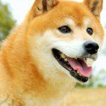 「柴犬 帰りたくない」の画像を見て、月曜日の「帰りたい」鬱な気持ちを吹き飛ばせ!